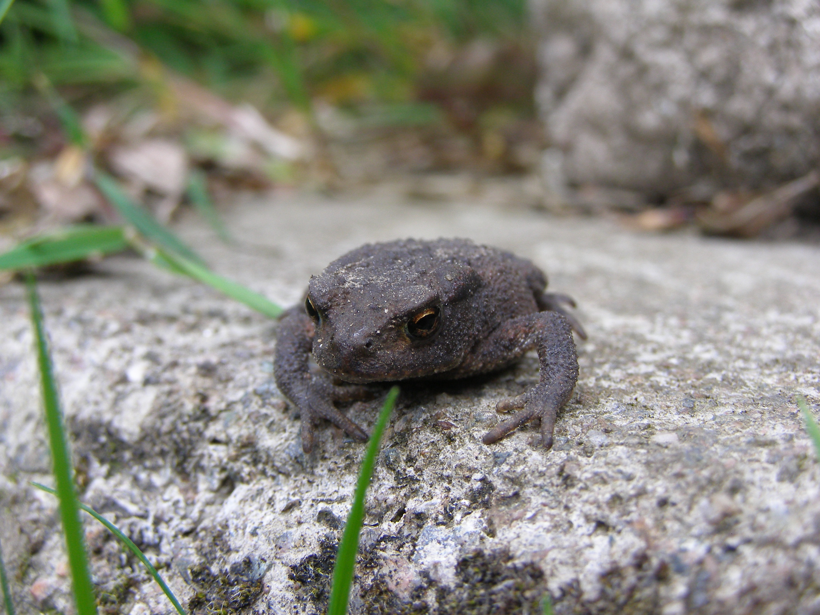 Turn out compost early to avoid disturbing hibernating amphibians
